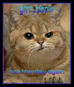 Monday blahs More