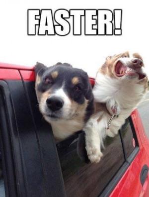 Funny-dog-meme-Faster-resizecrop--.jpg