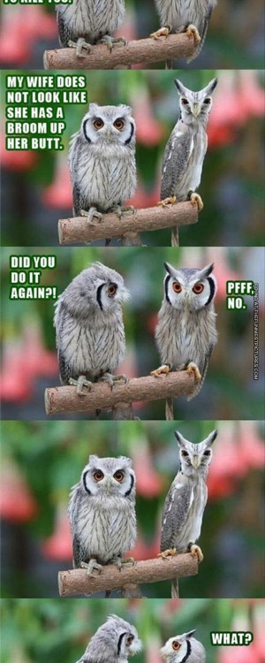 Tags: Owl , Owls , Teasing