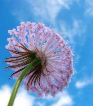 Dainty Bottom #flower