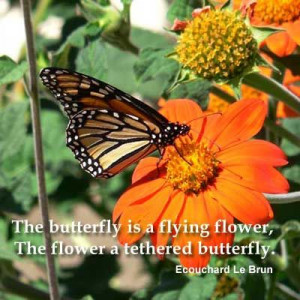 The Butterfly Is A Flying Flower...