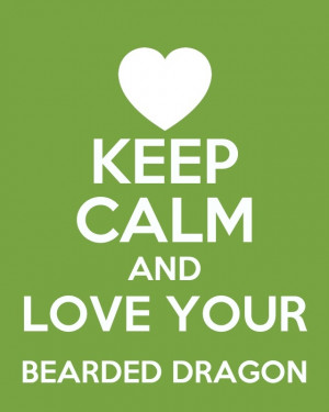 ... Dragons, Quotes, Beardeddragon, Bearded Dragons Funny, Beardy, Dragons