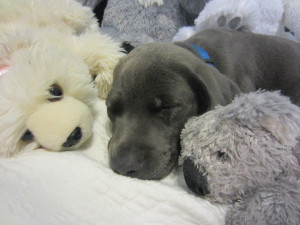 ... Puppies Cuddling With Their Favorite Stuffed Animals During Bedtime