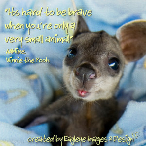 Funny Inspirational Animal Quotes .com/quotes/animal-quotes/