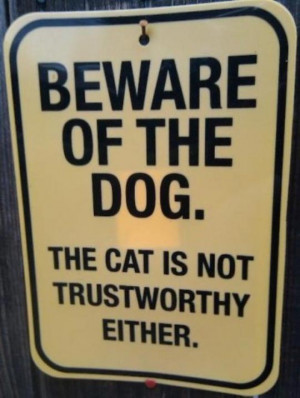 Funny Dog Quotes Funny Cat   Funny Jokes Quotes