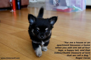 This a must for my home! #dogsquotes #dogquotes