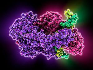 DNA mismatch repair complex