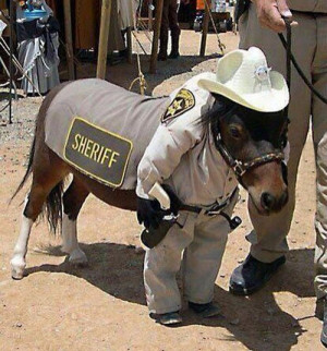 Just a Mini Horse Dressed as a Sheriff - CollegeHumor Picture