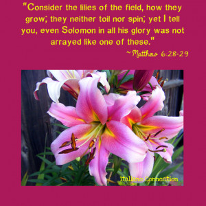 Consider The Lilies Field...