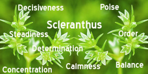 Positive potential of the bach flower remedy Scleranthus