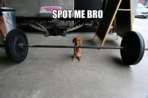 dog funny fitblr fitspo exercise fitness p90x