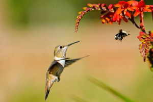 Spring Bird and Bee