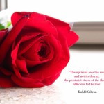 The optimist sees the rose..cute rose quotes