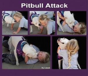 good pitbull bad dogs pitbulls pit bulls attacks