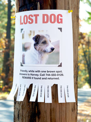Column: Factors that influence a lost dog