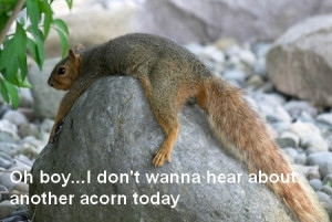 THE SQUIRRELS ARE GETTING READY...