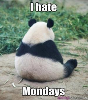Funny Panda Memes Funny Panda Memes