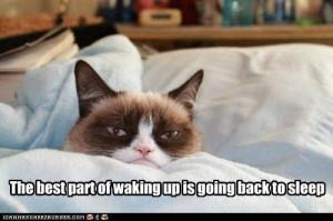 Grumpy Cat quote of the day - Grumpy Cat Fanart