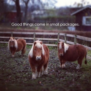 ... Quotes, Minis Hors, Small Packaging, Horses Quotes, Equestrian, Animal