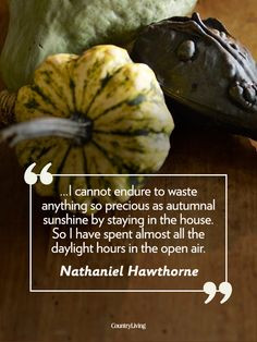 Quotes, Autumn Halloween, Autumn Sunshine, Fall Quotes, Fall Autumn ...