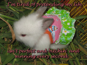 Charlie Sheen Quotes By Bunny Rabbits