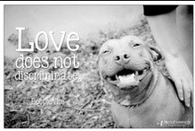 Animal Image Quotes / My images of shelter/rescue animals with some ...