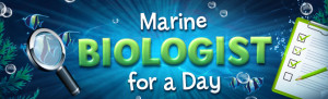 Marine Biologist Experience