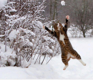 kittens playing in the snow quotes
