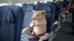 When Pigs Fly: Geico Brings Back Maxwell for Airplane Ad