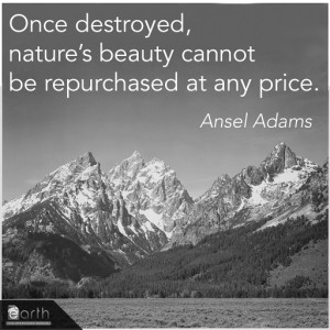 cool quote smart quote decent quote ansel best click the