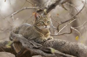 Cat Www Purinaon Com, Visit South, Cat Wild, Expert Visit, Wild ...