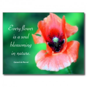 ... Flower Is A Soul...Poppy Photography & Quote Postcards by time2see