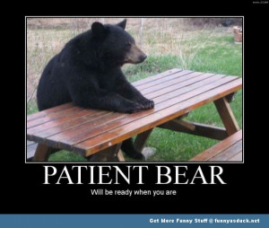 ... pics pictures pic picture image photo images photos lol animal bear