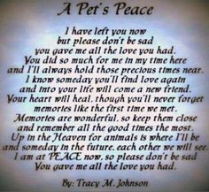 ... , Pet Loss, Animales Quotes, Beloved Pet, Animal Sayings Quotes
