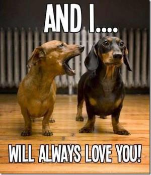 dog_dachshund_captions.jpg