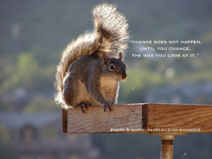 Squirrels with Quotes