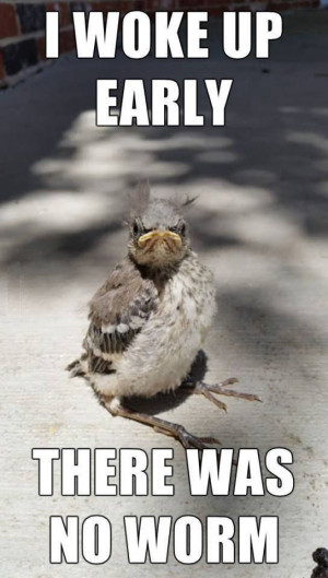Early bird didn't catch worm