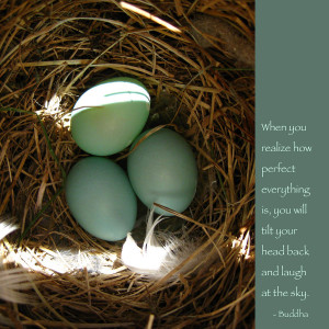Bluebird Eggs With Buddha Quote Photograph