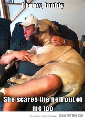 Funny photos funny big dog scared