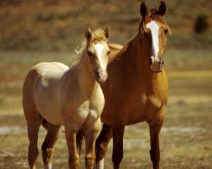 Amazing Horses by Lemieux66