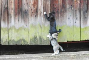 Kitten teamwork