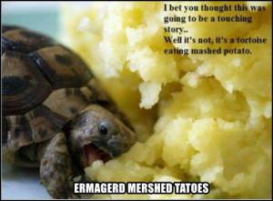 Funny Tortoise Eating Mashed Potato