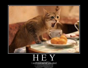 Angry Cat Wants Decaf
