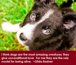 Dog Lovers, Dog Quotes, Pet Photography, Dog Photography, Pinterest