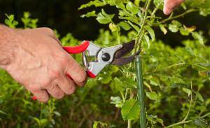 garden water wise tips for starting a veggie garden this summer tips ...