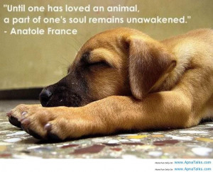 dog is child sayings | Anatole France Dog Funny dog on bed rest funny ...