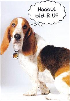 Hound Dog Post Cards Basset
