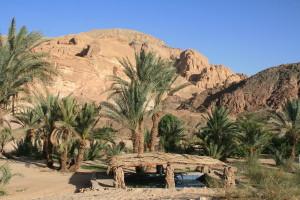 4322394-Oasis-in-the-desert-0.jpg