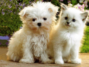 ... kitten and puppy picture beautiful kitten and puppy picture kitten and