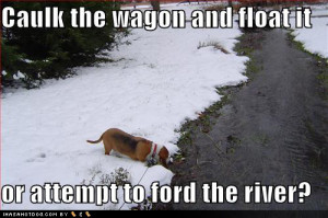 Displaying (13) Gallery Images For Funny Beagle Quotes...